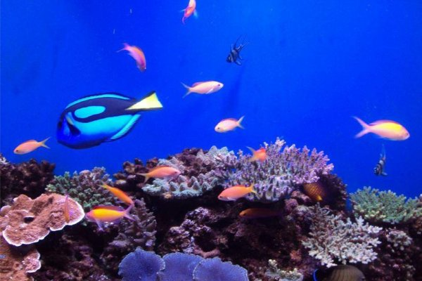 The aquarium has various fish on display.