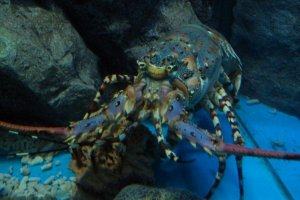 More friendly sea critters are around every turn,