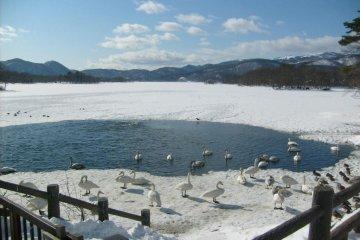 冬季的大沼湖