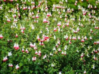 Bunga-bunga yang bermekaran di taman