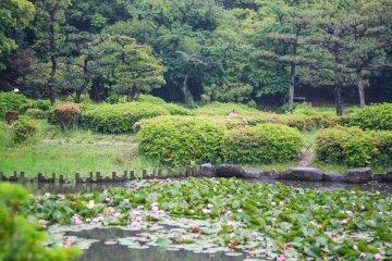 Taman Hattori Ryokuchi
