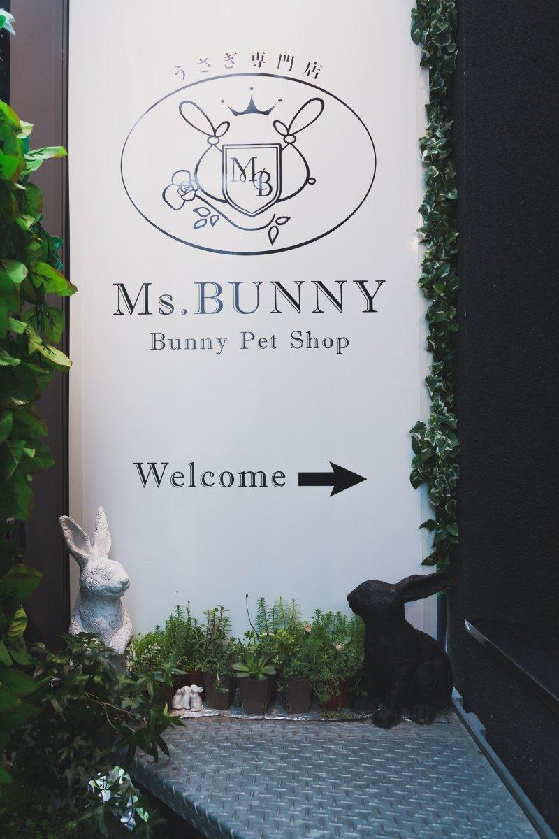 Bunny and Hedgehog Café - Roppongi, Tokyo - Japan Travel