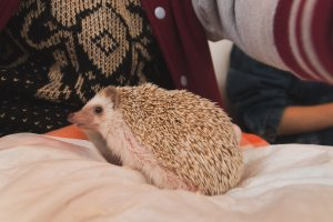 And the hedgehog