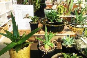 附生植物 - 珍奇植物櫥窗