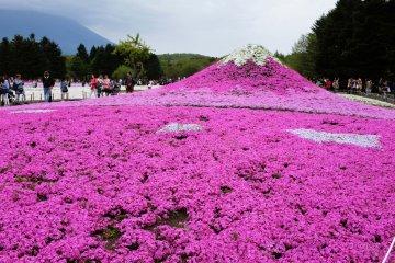 一座富士山設計的芝櫻