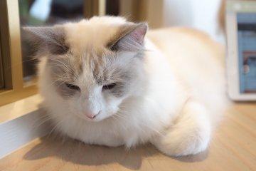 一進門就撞見懶洋洋睡著午覺的貓咪