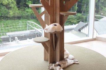 咖啡廳室內設計裝潢:立體大樹變成了貓咪的遊樂場