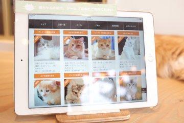 MoCha貓咪咖啡廳的貓咪簡介及介紹