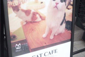 貓咪咖啡廳的招牌