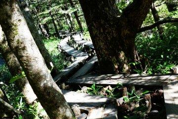 wooden paths arround kamikochi