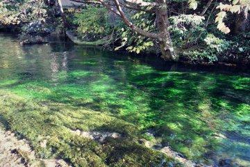 emerald green shining river