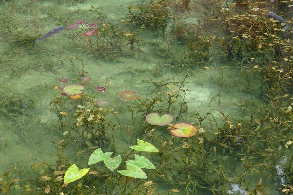L\'eau claire de l\'étang \