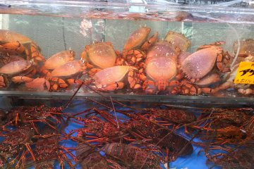 Live crabs and lobsters in tanks
