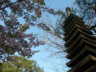 Những cây hoa anh đào tỏa bóng mát trên chùa đá cao
