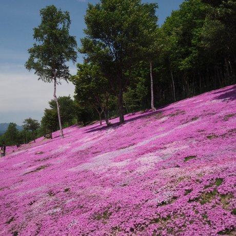 Mousses en Fleurs à Takinoue