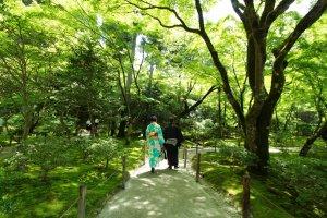 A couple wearing kimono strolling inside the Zen temple