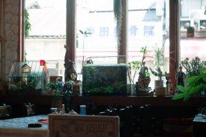 Une serre, un aquarium, des figurines et de fausses plantes décorant l'intérieur du café