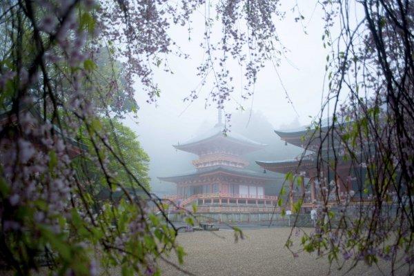 Momen yang menangkan di kompleks candi Enryaku-ji