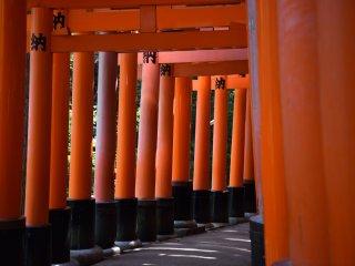 Gerbang torii