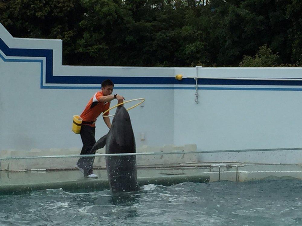 Le dauphin et le cerceau