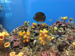 Un joli poisson et le corail