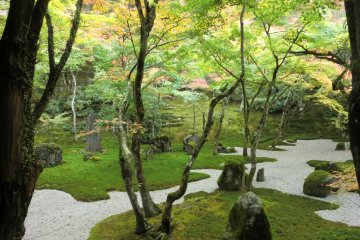 The Beauty of Fukuoka's Moss Temple