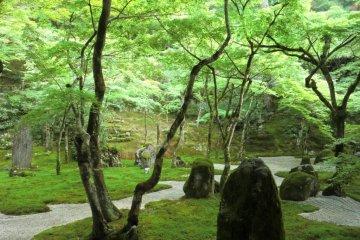 Main garden (July)