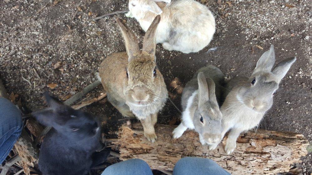 มีกระต่ายอยู่มากมายก่ายกอง