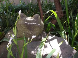 Another frog turned to stone