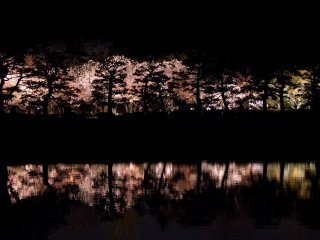 The view of lit up sakura from across the moat