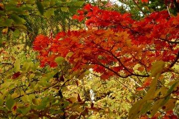 나뭇잎마다 고유의 아름다움이 있다