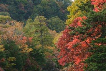 유노카와을 따라 내려와 류즈노타키 폭포를 거쳐 얼마 안 있어 주젠지 호수로 가을을 실어간다