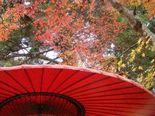 red antique umbrella in front of autumn leaves