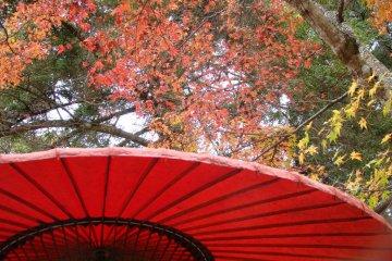 秋叶前的红色复古伞