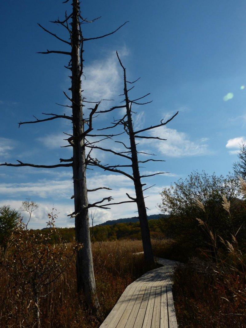为了保护自然风景,铺有观光用的木质小道