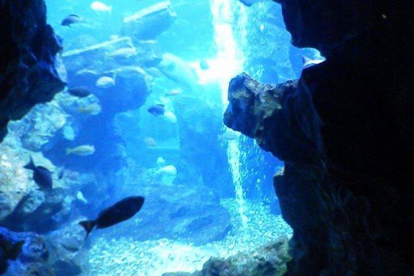 海洋馆内炫丽的水槽