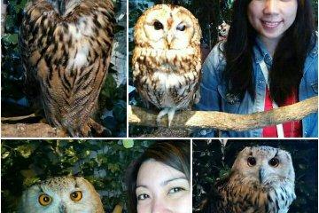 เพลิดเพลินใจที่ Kamakura Owl's Forest