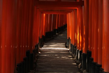 Así se ve cuando paseas entre la fila de torii.
