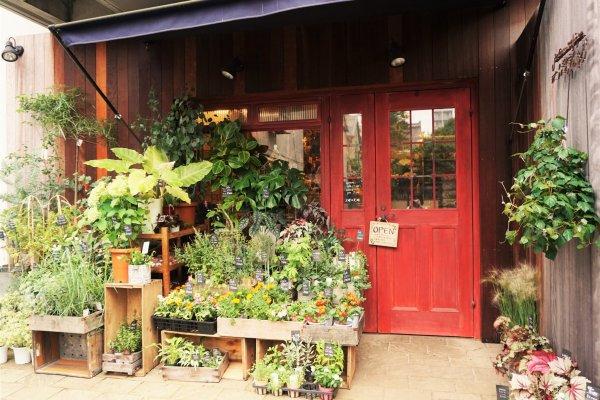 店門口擺放了許多的盆栽。