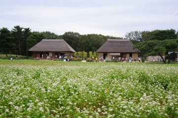 Traditional Japanese House. They often have a bloom making class here.