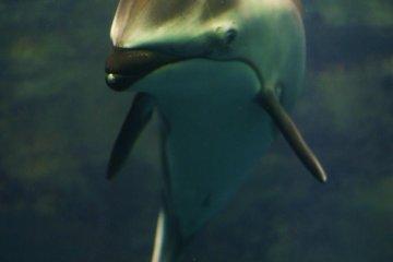 友好的海豚
