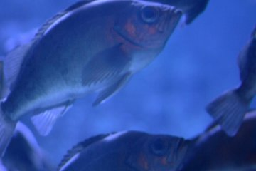 Nemo在哪里?