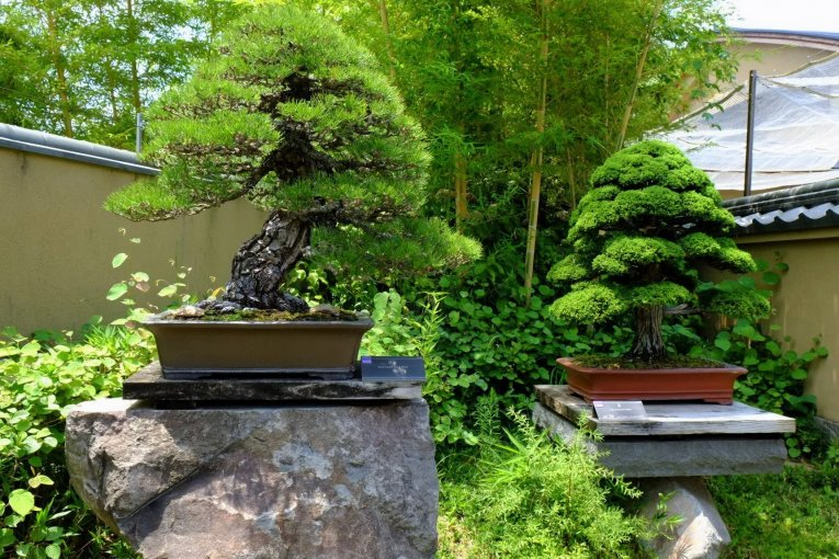 Omiya Bonsai Art Museum