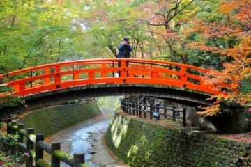 ลายแทงตามล่าชมใบไม้เปลี่ยนสีในเกียวโต