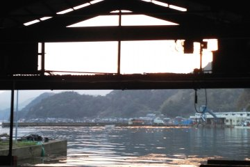 Ine Fishing Port – Sashimi does not get fresher than this