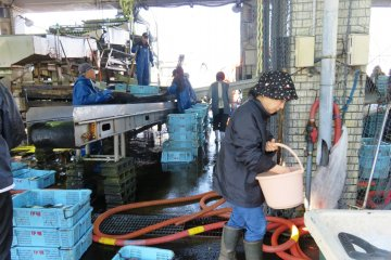 Ine Fish Market in action each morning