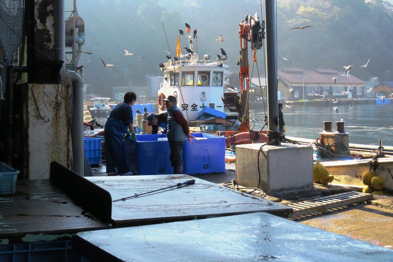 Ine Fish Market in action