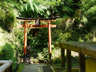 Make a prayer at the temple's small tori