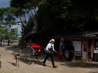 A common scene around the shrine: rikshaws and deer