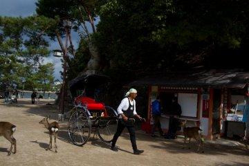 <p>A common scene around the shrine: rikshaws and deer</p>
